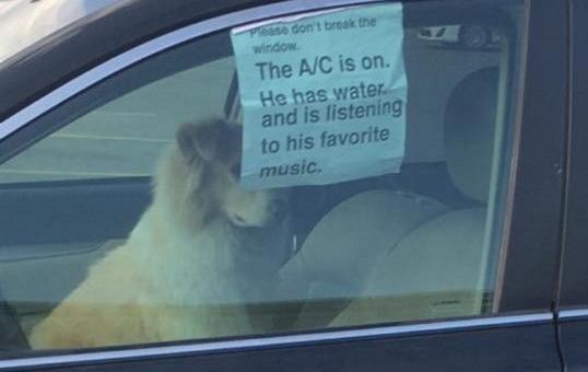 dog_w_ac